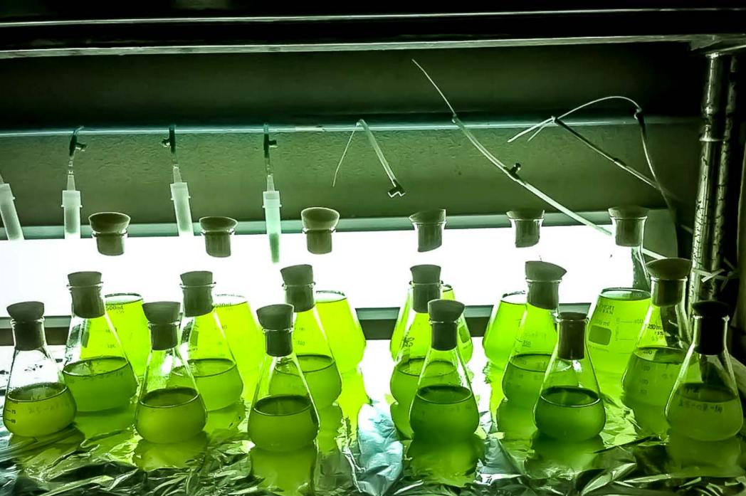 藻のバッテリー開発!従来のリチウムイオン充電の200倍の性能