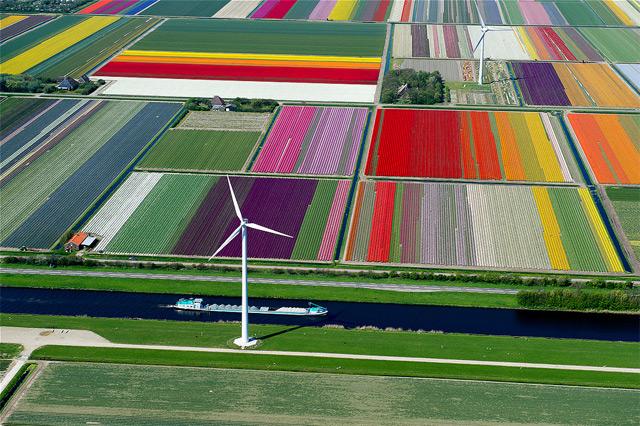 オランダのチューリップ畑